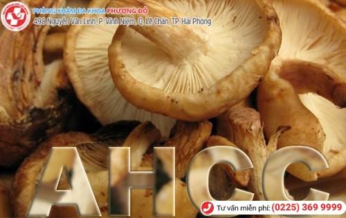 Thuốc AHCC điều trị sùi mào gà có thành phần chính từ một loại nấm ở Nhật Bản