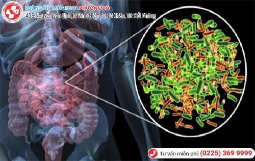 Hình ảnh vi khuẩn E.coli sống trong ruột gây bệnh
