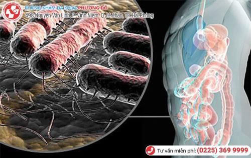 Hình ảnh vi khuẩn E. Coli gây bệnh viêm đường tiết niệu