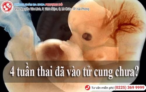 4 tuần thai đã vào tử cung chưa