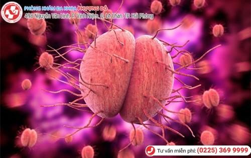 Hình ảnh minh họa virus gây bệnh lậu